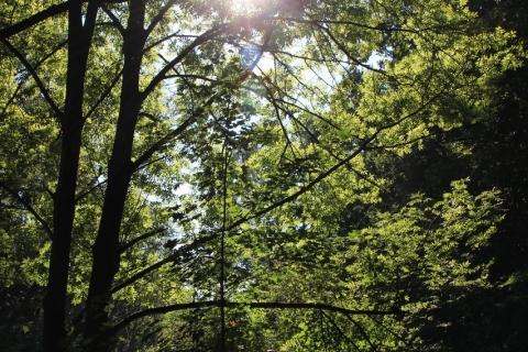 Unterwegs bei Hornsburg im Wald (27.08.2016)