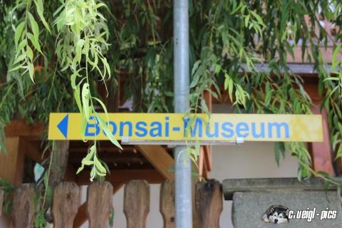 Besuch im Bonsai Museum in Seeboden