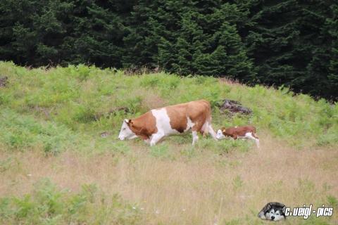 Besuch im Tauerntal und der Jamnighütte