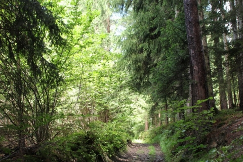 Unterwegs in Kärnten - Wunderblumenweg in Lendorf, Ausflug nach Mallnitz