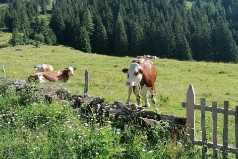 Wanderung im Gschlösstal (28.07.2020)