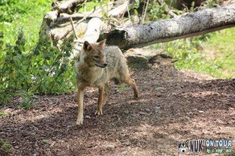 Wildpark Assling (17.07.2019)