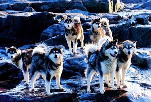 Huskies_2000-08-24
