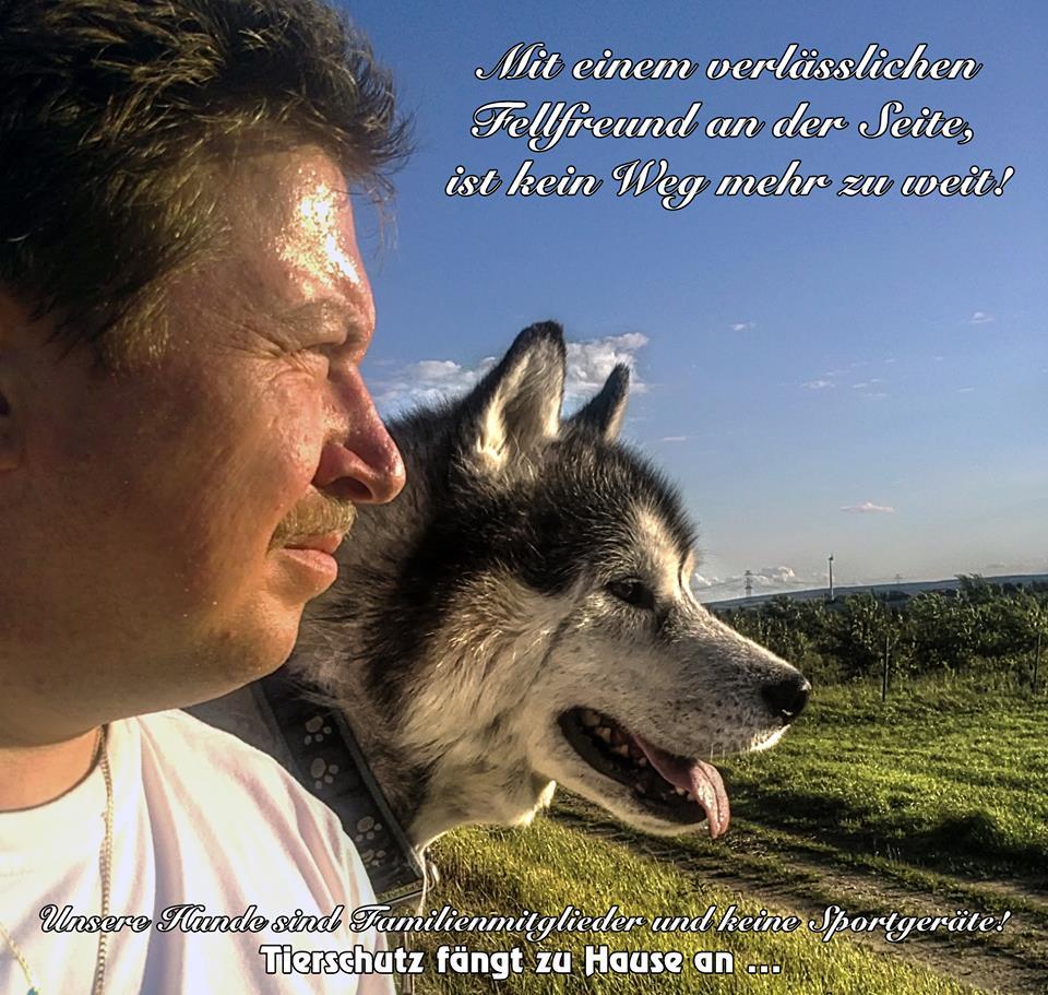 sprüche über hunde zum nachdenken Relativ SprüChe üBer Hunde Zum Nachdenken @QG73 | Startupjobsfa sprüche über hunde zum nachdenken